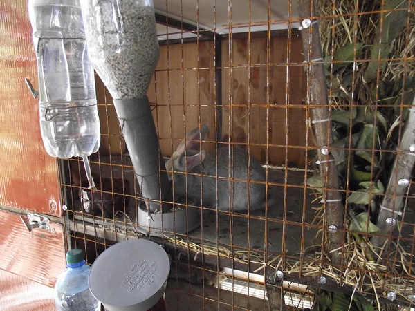 Кормушки и поилки для кроликов своими руками видео
