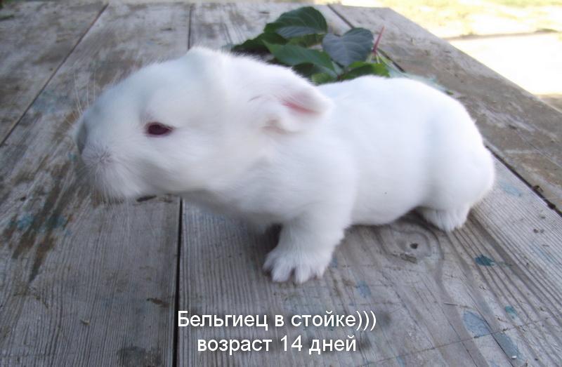 Флудильня о кроликах - Страница 5 DSCF6079